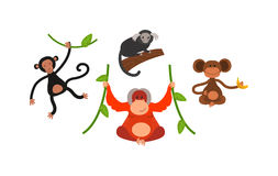Monkey vector illustration. Cartoon monkey vector illustration. Monkey animal and jungle cartoon wild life. Monkey cute types cute primate . Monkey zoo jumping Stock Photography