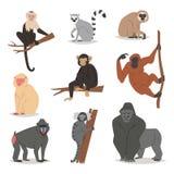 Monkey vector set cute animal macaque monkeyish cartoon character of primate chimpanzee, gibbon and babbon monkeyshines. Illustration isolated on white Stock Photos