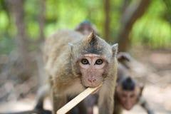 Monkey in Vietnam Stock Photos