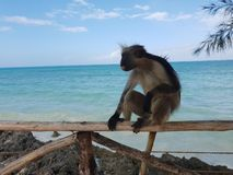 monkey with a view stock photos