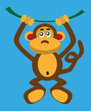 Monkey on a vine Stock Image