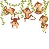 Monkey on vine. Vector illustration, eps Stock Images