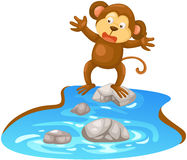 Monkey walking cross the river Stock Images