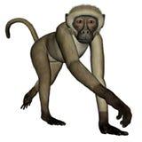 Monkey walking - 3D render Stock Photos
