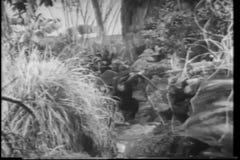 Monkey walking through jungle stock video