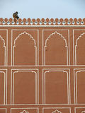 A monkey on the wall of Jaipur City Palace, India Stock Image