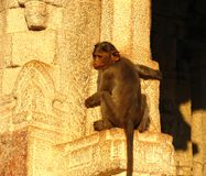 Monkey on the wall of a temple Stock Photography