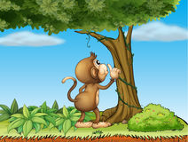 A monkey watching a tree Royalty Free Stock Image