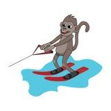 Monkey water skiing Stock Image