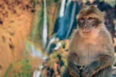 Monkey waterfall Stock Photo
