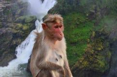 Monkey and waterfalls Stock Photo