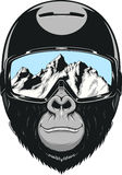 Monkey wearing a helmet. Vector illustration of a gorilla in a helmet for snowboarding Stock Photos