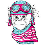Monkey wearing a helmet. Royalty Free Stock Photography