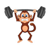 Monkey weightlifting Cartoon Stock Image