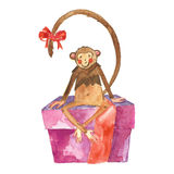Monkey on white background Royalty Free Stock Photo