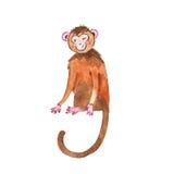 Monkey on white background Royalty Free Stock Photography