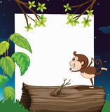 A monkey and white board in nature Royalty Free Stock Images