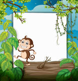 A monkey and white board in nature Stock Photo