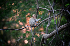 Monkey wild animal sitting on tree with sunset Stock Photos