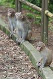 Monkey Stock Images