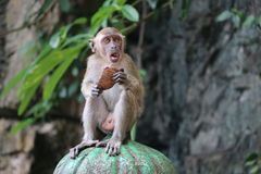 Monkey. Wildlife is so amazing.sometimes is looks unbelievable Royalty Free Stock Images
