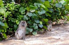 Monkey in wildlife Stock Image