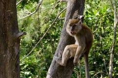 Monkey in wildlife Stock Photography