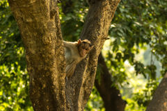 Monkey. Wildlife Photography. Captured this curious monkey sanjay gandhi national park Stock Photos