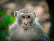 Monkey Wildlife Stock Photography