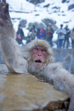Monkey in Wintertime Royalty Free Stock Images