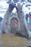 Monkey in Wintertime Stock Photo