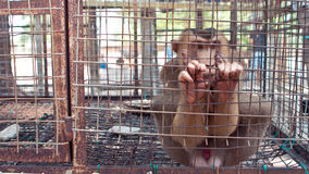 Monkey in wire cage Royalty Free Stock Images