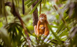 Free Monkey With Baby Stock Images - 48613474