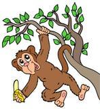 Monkey With Banana On Tree Stock Photo