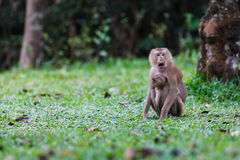 Monkey y su bebé Imagen de archivo libre de regalías