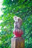 Monkey y su bebé Fotografía de archivo libre de regalías