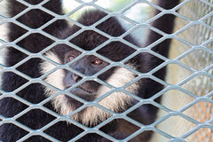 Monkey in zoo Stock Photo