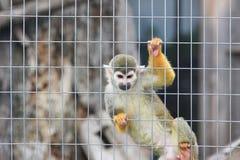 Monkey in zoo Stock Photos