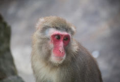 Monkey zoo Africa mammal animal Stock Photos