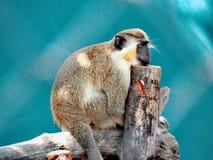 Monkey. Zoo, animal, art, sleep Royalty Free Stock Images