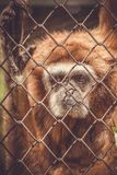 Monkey in a zoo behind bars stock image