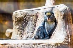 Monkey in zoo. Monkey sitting on stone in zoo Stock Image