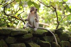 Monkeybusiness Royalty-vrije Stock Fotografie