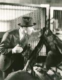 Monkeying around Stock Photos