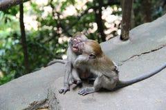 Monkeying around Royalty Free Stock Photo