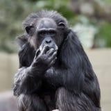 Monkeying herum Stockfoto