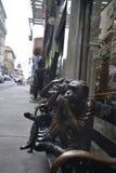monkeys велемудрое Стоковые Фотографии RF
