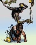 Monkeys. Two monkeys isolated on light background Stock Image