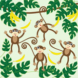 Monkeys Royalty Free Stock Images