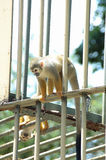 Monkeys Stock Photos